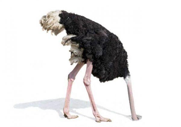 ostrich-hiding-ignoring